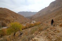 在犹太山的沙漠旱谷 免版税图库摄影