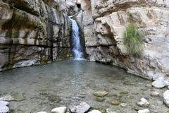 在犹太沙漠绿洲的瀑布 库存图片