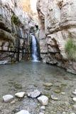 在犹太沙漠绿洲的瀑布 免版税库存照片