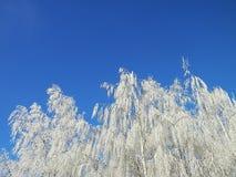 在狂放和树的冬天霜 免版税库存照片