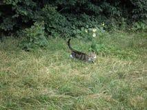 在狂放的一只小猫 库存图片