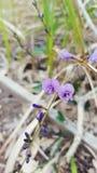 在狂放的一朵紫色花 库存图片