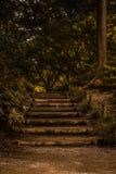 在狂放的台阶对充分森林绿色和树 库存图片