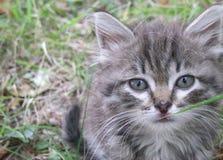 在狂放的小猫 免版税库存图片