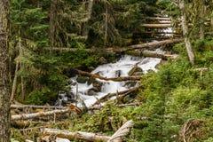 在狂放的山小河的快速的水小河在Joffre湖省公园绿色森林风景 免版税库存照片