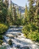 在狂放的山小河的快速的水小河在Joffre湖省公园绿色森林风景 库存照片