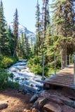 在狂放的山小河的快速的水小河在Joffre湖省公园绿色森林风景 图库摄影