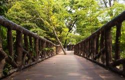 在狂放的森林中的木桥道路 库存照片