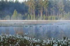 在狂放的森林湖的有薄雾的早晨 免版税库存照片