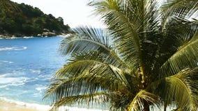 在狂放的海滩的棕榈树 股票视频