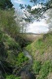 在狂放的灌木中的曲折河 免版税库存照片