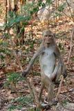 在狂放的热带雨林里胡闹树的海岛 免版税库存照片
