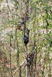 在狂放的热带雨林里胡闹树的海岛 免版税图库摄影