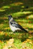 在狂放的自然的惊人的秀丽鸟 免版税图库摄影