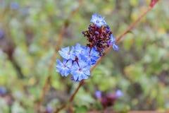 在狂放的自然的紫色花在美好的boheh背景 图库摄影