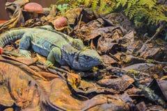 在狂放的自然的绿色成人变色蜥蜴在从树的干燥叶子中 库存图片