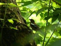 在狂放的自然的美丽的鸟 库存照片