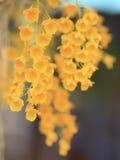 在狂放的自然的黄色热带兰花花与迷离backgroun 库存图片