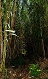 在狂放的自然道路的芦苇 库存图片