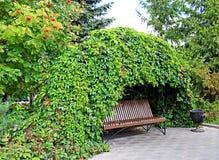 在狂放的葡萄下卷曲丛林的长凳  免版税库存照片