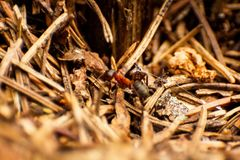 在狂放的蚂蚁-特写镜头照片 图库摄影
