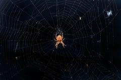 在狂放的蜘蛛 免版税库存图片