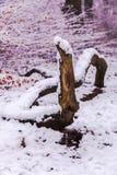 在狂放的雪 免版税库存图片