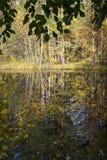 在狂放的taiga的沼泽在秋天 库存图片