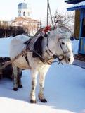 在狂欢节的马 免版税库存照片