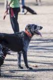 在狗公园的两条狗 免版税库存照片