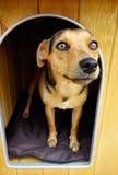 在狗屋风雨棚的布朗小狗 免版税库存照片