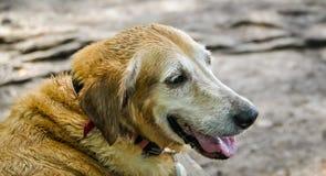 在狗湖的美好的天 库存图片