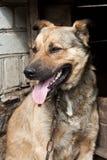 在狗窝附近的狗 免版税库存照片