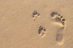 在狗脚印旁边的人的脚印在热带海滩 免版税库存图片