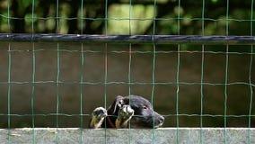 在狗风雨棚的小的哀伤的不需要的小狗 股票录像