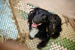 在狗风雨棚的无家可归的狗在等待fo的篱芭后 免版税库存图片