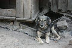 在狗` s房子前面的村庄狗 库存图片