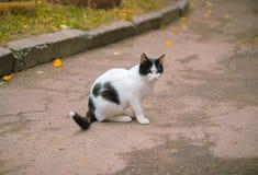 在狩猎的一只猫在攻击前 免版税图库摄影