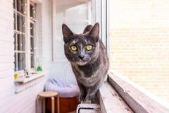 在狩猎的一只猫 库存照片