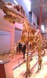 在狩猎的恐龙 库存图片