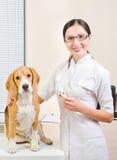在狩医的狗 库存图片