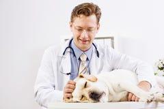 在狩医诊所的狗 免版税库存照片