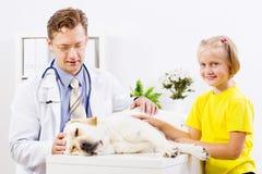 在狩医诊所的狗 库存照片