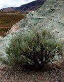 在独特的地质的鼠尾草 免版税库存照片