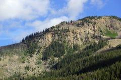 在独立通行证山的绿色树  免版税库存图片