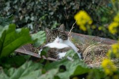 在独轮车的猫 免版税库存图片