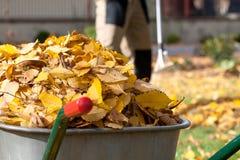 在独轮车的秋叶 免版税库存照片