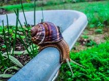 在独轮车的边缘的一只蜗牛 免版税库存照片