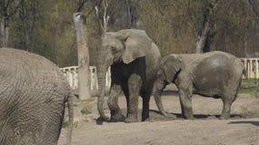 在狭小通道的两头大象 免版税库存图片
