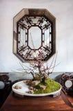 在狮子林,苏州,中国的盆的盆景树 免版税图库摄影
